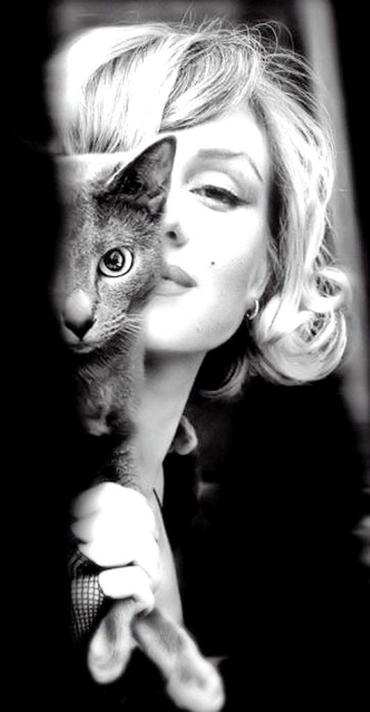 Marilyn Monroe's Persian Cat